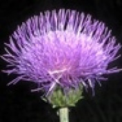 LynnScotland profile image