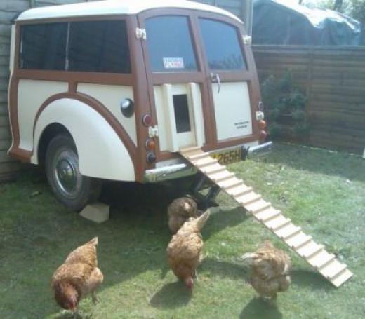 Amazing Chicken Hutch