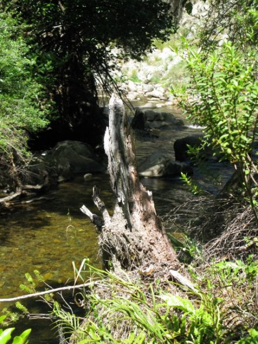 Black Valley Stream which is beside a short 15 minute walk between the lake and the shopping - accommodation areas.
