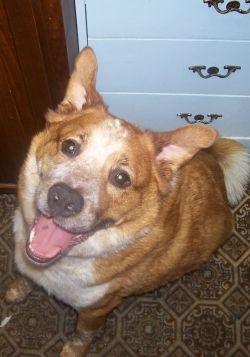 Happy Sitting Dog