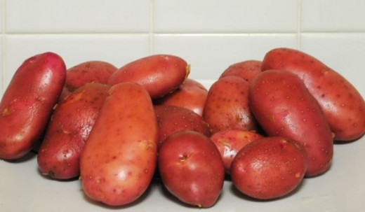 Red fingerling potatoes, newly harvested