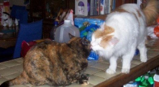 Patches Cleaning Cindy