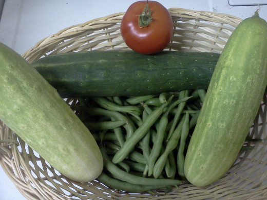 Beans, cucumbers, and single tomato harvest 8/11/13