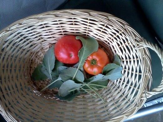 8/26/13 Harvest