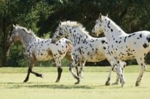 Beautiful, Rare and Unusual Horse Breeds