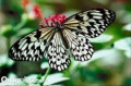 Worlds Most Beautiful Butterflies and How to Attract Butterflies To Your Garden