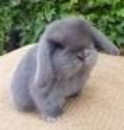 Best 10 Rabbit Breeds as Pets for Children