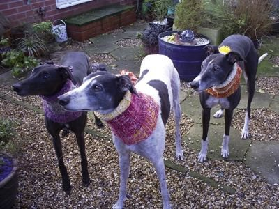 Rescue dogs in knitted snoods (c) Erin Hounds