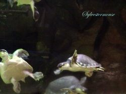 Turtles at the Memphis Zoo