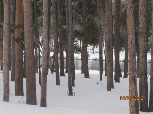 Pristine Forest