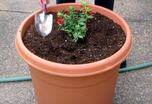 Plant plants.