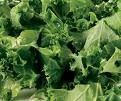 Raw Kale Salad