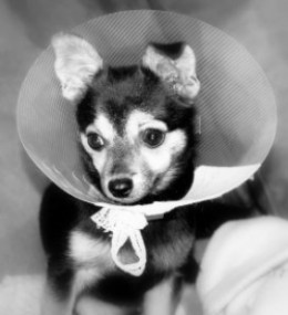 Can My Dog Eat After Anesthesia