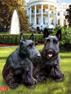 George Bush's Dogs on a Jigsaw Puzzle