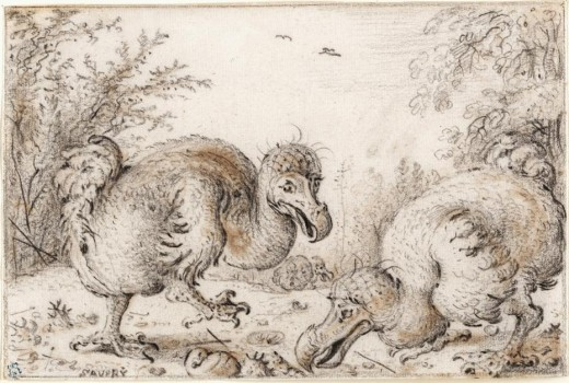 Dodo Birds by Roelant (Roelandt) Savery, public domain