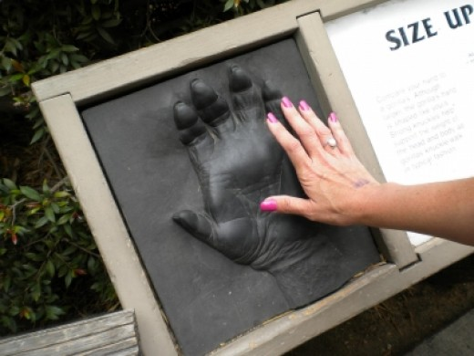My Hand Compared to a Gorilla's Hand