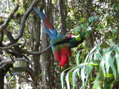 A Beautiful Macaw Bird Hanging Upside Down