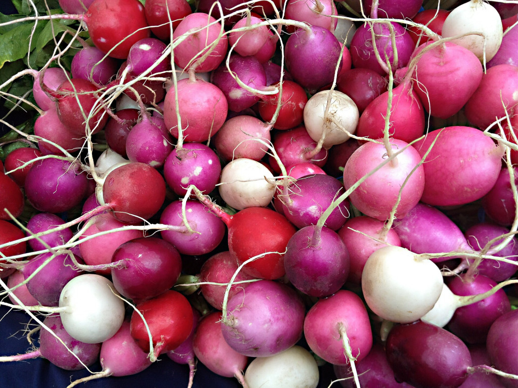 Radishes and radish plants facts nutrition and health benefits