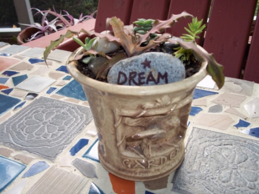 Dream Star Bromeliad