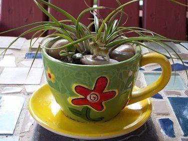 Teacup Bromeliad with Mini Rabbit