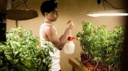 Ra'Nel cares for the marijuana farm