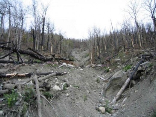Fire Destruction - Public Domain Photo