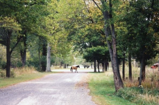 Rider lets horse run in Route 66 State Park