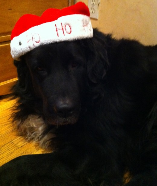 Maggie Magz sporting her Christmas hat. She loves to play dress up.
