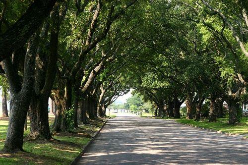 Hurricane resistant Live Oaks overarching historic neighborhoods, Georgetown