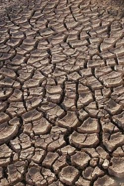 Extreme drought conditions