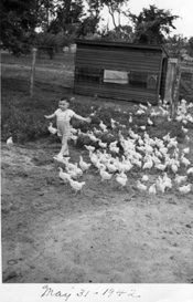 Billie leads the Chickens, May 31, 1942