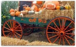 Barn Yard Wagon
