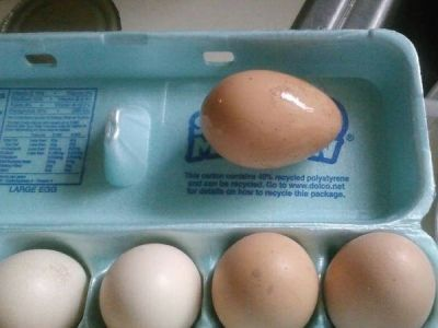 Natural Organic Eggs still warm from the coop