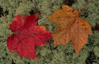 Find Beautiful Leaf Specimens for Projects