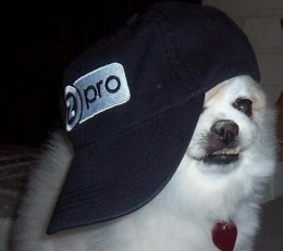 """Bella the """"Proseller"""" (Our Mascot At TeeZazzle.com)"""