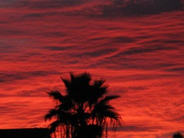Reddish clouds at sunset provide a backdrop for this Tucson, AZ Palm Tree