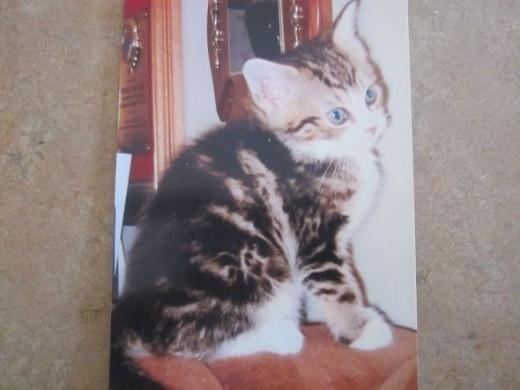 Mimi Kitten Baby Photo