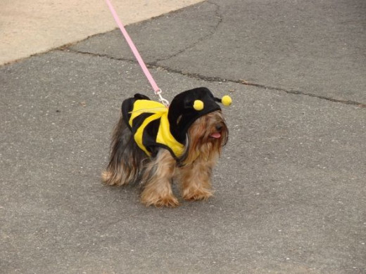 Even the bumble bees are buzzing about the fun
