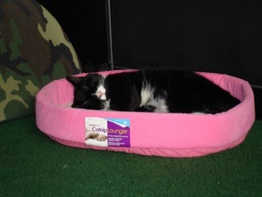 Charli Cat's Favorite Bed