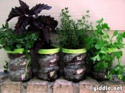 Plastic Bottle Herb Garden