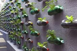 Plastic Bottle Hanging Garden