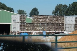 Battery chickens in cages, in Oregon. Copyright friendsoffamilyfarmers