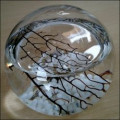 Aquatic Closed EcoSphere Ecosystem Décor For Your Home or Office