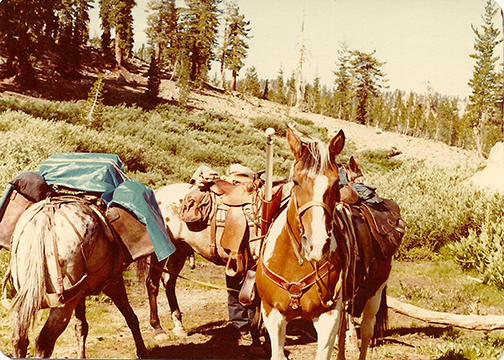 Packing the horses for one of Dad's camping trips.