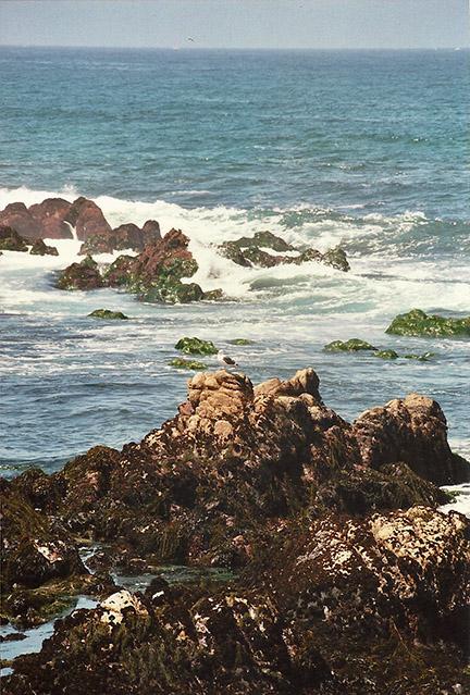 Monterey, California, beautiful by the sea.