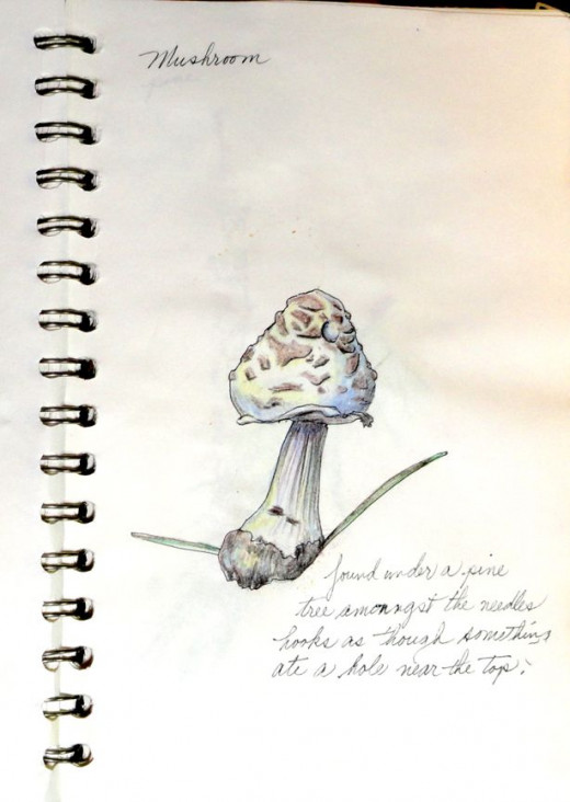 A page from my nature journal of a mushroom I found.
