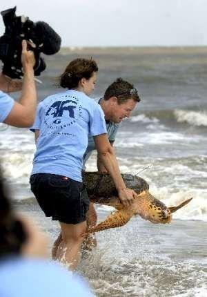 Murphy is Released into the Ocean