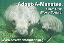 Adopt a Manatee