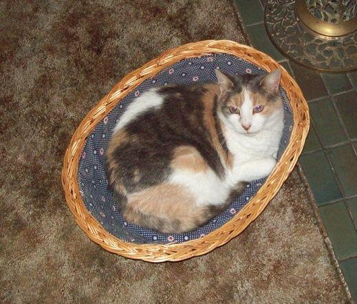 Tia in her basket.