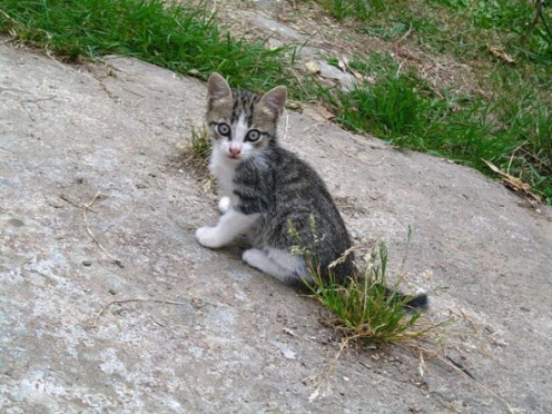 Kitten on a rock.